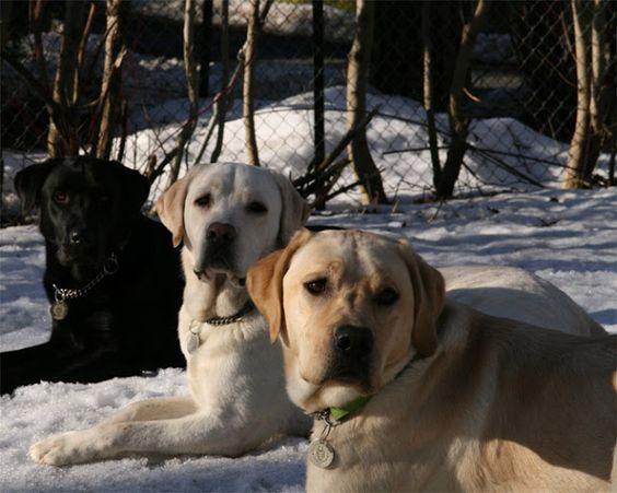 Fada dos Pets: Raças de cachorros mais bonitas #1