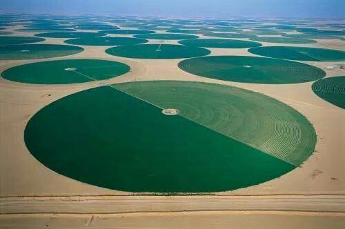 Desert Agriculture in Arabia Saudi