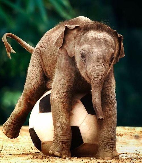 Bebê Elefante brincando