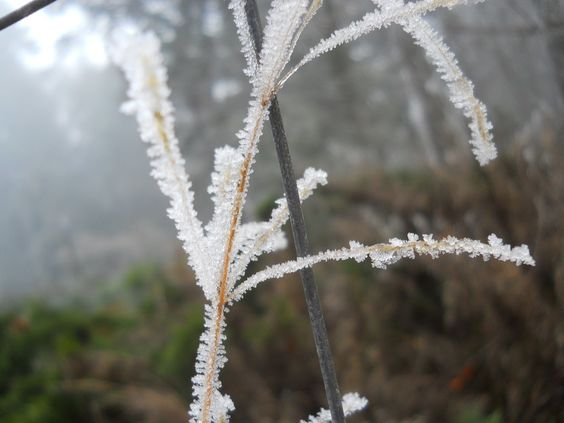 Frost by fatcatbeatrice.deviantart.com on @deviantART
