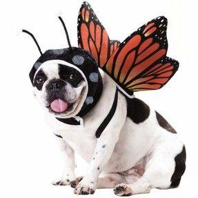 Funny dog costumes ;-)