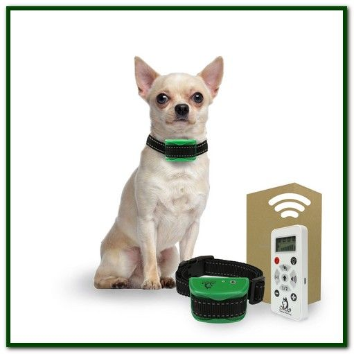 Best Shock Collar For Small Dogs Reviews Dog Training Collar
