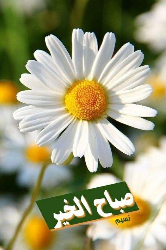 صباح مشرق جميل لأنقياء القلوب الصاااابريين المنتظرين كثيرااا والموقنيين أن الفرج أت بإذن الله Flower Photos Amazing Flowers Most Beautiful Flowers