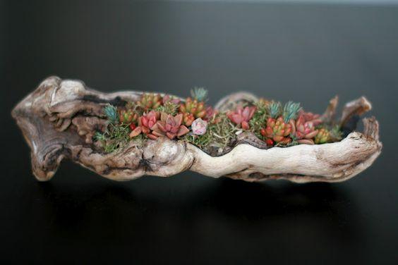 driftwood succulent planter.: