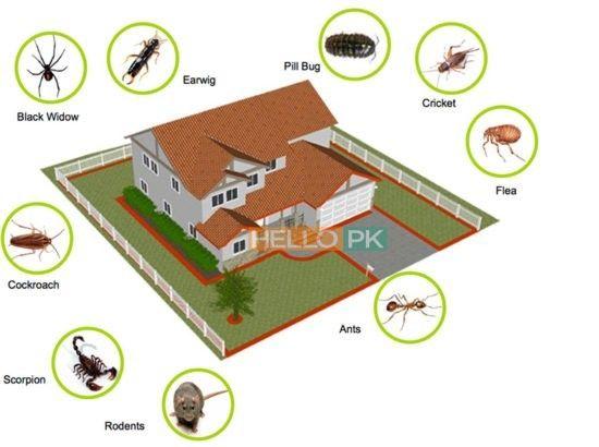 Fumigation Pest Control Deemak Khatmal Lalbaig Pest Control Pests Pest Control Services