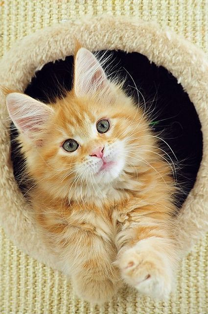Lovely kitty: