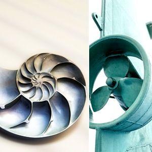 le nautile, comme de nombreux coquillages, a une forme parfaite qui inspire les industriels
