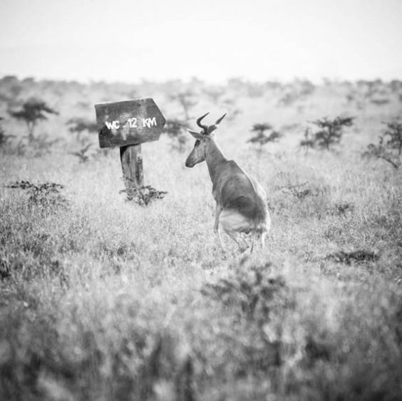 Hakuna Matata, the Funny Life of Animals in Africa
