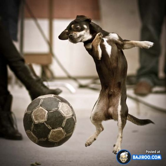 18 Pictures Of Funny Dogs Playing Football
