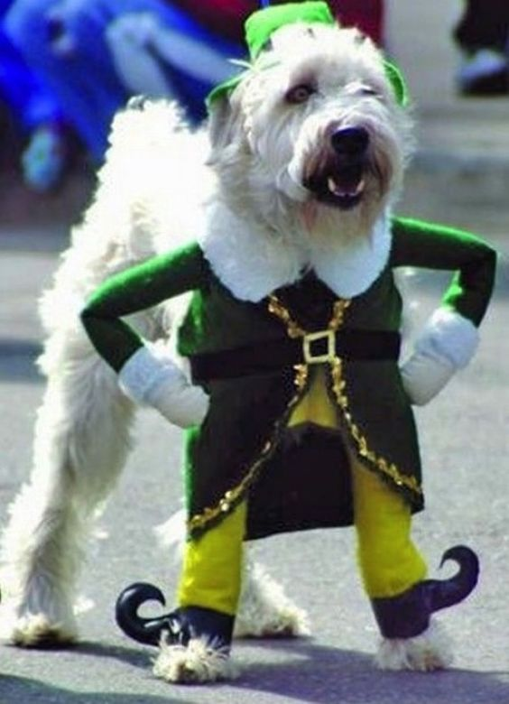 Dog costume: