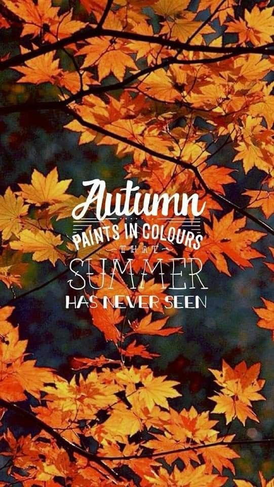 Pin By Maria Bent On Fall Wallpaper In 2020 Autumn Phone Wallpaper Fall Wallpaper Iphone Wallpaper Fall