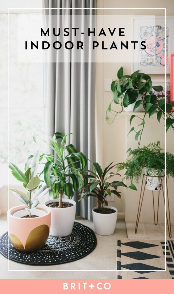 11 Crazy Cool House Plants Trending In 2016 Spring 400 x 300