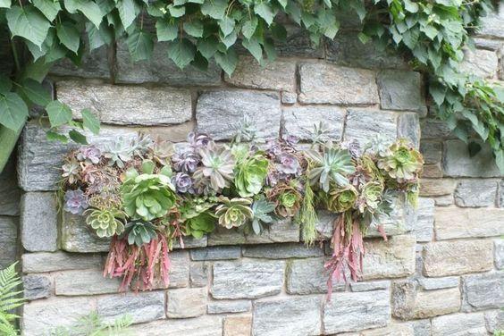 mur en pierre et  plantes succulentes idée pour le jardin
