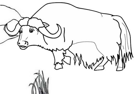 Pin By Dan Babei On Watercolor In 2021 Cartoon Coloring Pages Farm Coloring Pages Cool Coloring Pages