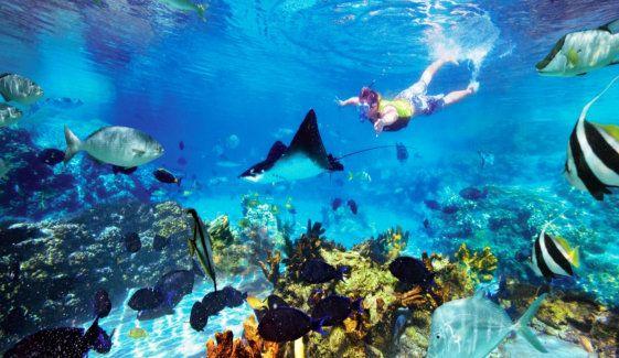 Lặn biển ở Koh Rong được rất nhiều du khách yêu thích