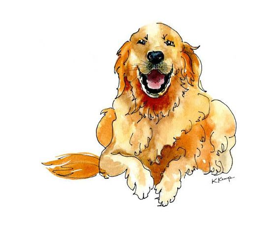 Golden Retriever Drawing in Pen & Ink with Watercolor, Pet Portraits, Dogs, in Gold, Rust, art print. $18.00, via Etsy.