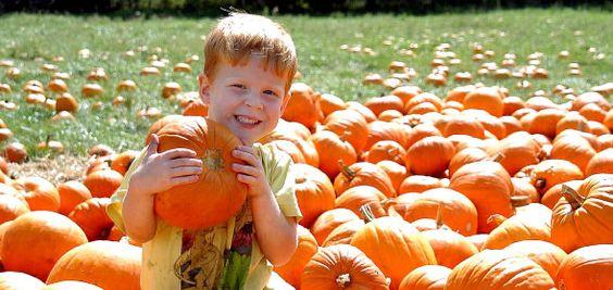 Pumpkins, zip line, gourd gun, haunted barn