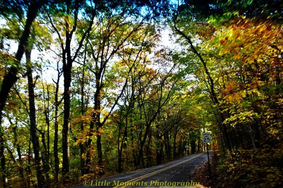 Fall, Colors, Digital Download, Photo, Photography, Arkansas, Roads, Devil's Den, by LittleMomentsPhotos on Etsy