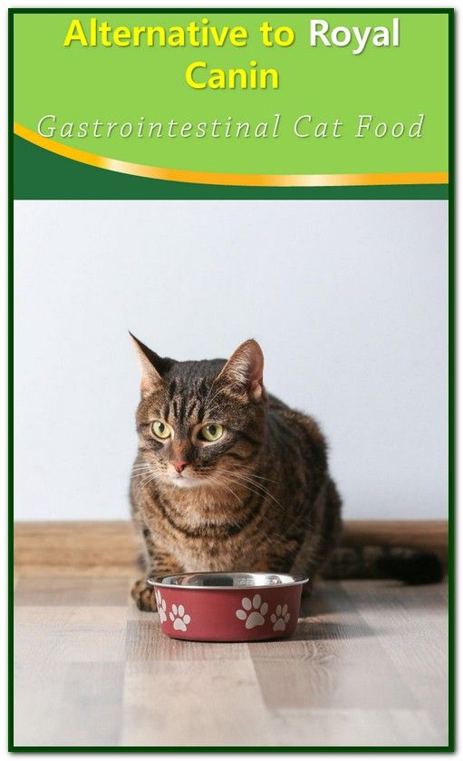 Alternative To Royal Canin Gastrointestinal Cat Food Cat Food Cats Royal Canin