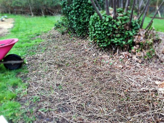 Step By Step To Plant A Back To Eden Garden Gardening Pinterest Gardens Back To And Plants