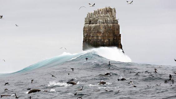 Un grupo de animales marinos se alimenta masivamente debajo de la monolítica Eddystone Rock. La zona está a unos 26 kilómetros de Tasmania del sudeste del Cabo y es verdaderamente un lugar salvaje