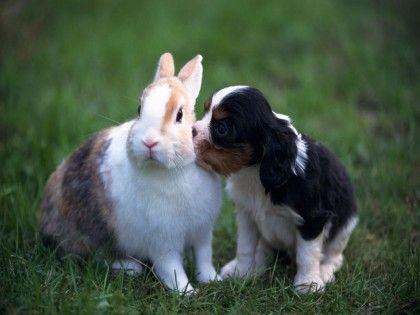 Puppy Kisses...