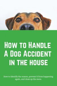 How To Handle A Dog Accident Dog Accidents Pet Cleaning