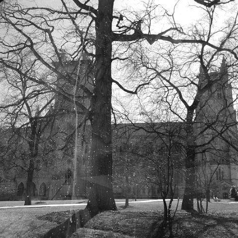 Una de las catedrales más grande del mundo: Catedral Nacional de Washington. ~  One of the largest cathedrals of the world: Washington National Cathedral.  #photographersvzla #photography #awesome_photographers #blackandwhite #blackandwhitephotography #cathedral #church #washington #usa #trip #tree