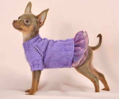 Вяжем комбинезон и свитер для той-терьера | Suéteres para perros