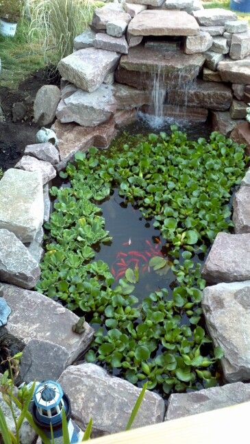My fish pond with frog on lower left rock gardens for Koi pond rocks