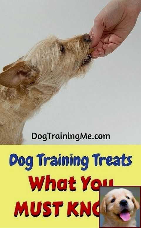 Dog Behavior Training School And Sniffer Dog Training Courses Uk Dog Training Treats Dog Behavior Problems Easiest Dogs To Train