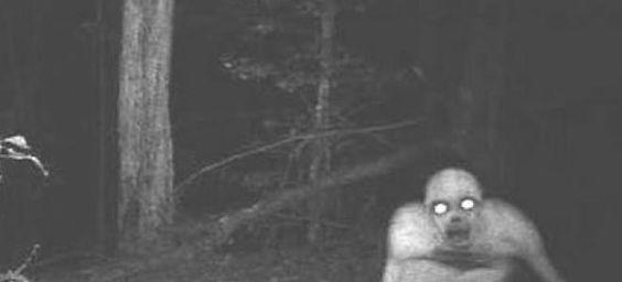Vous aimez vous promener la nuit dans la forêt ? Vous allez sûrement y renoncer après avoir vu ces clichés terrifiants captés par des détecteurs de mouvements.