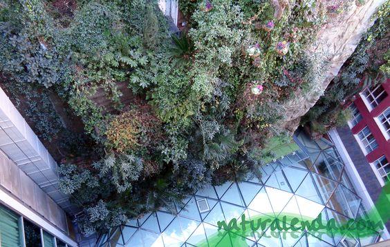 La naturaleza en casa: Jardin vertical del hotel Santo Domingo