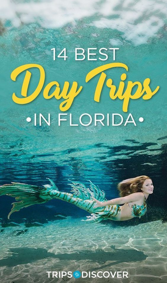 The 14 Best Day Trips In Florida Florida Travel Visit Florida Florida Attractions