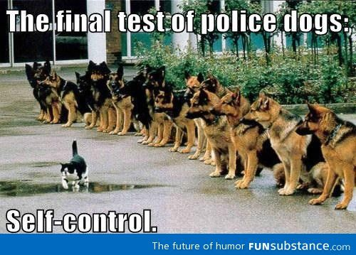 Final Police Dog Test Finals Dog And Animal - This dog has some serious self control that will make you laugh