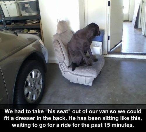 That's a good boy!