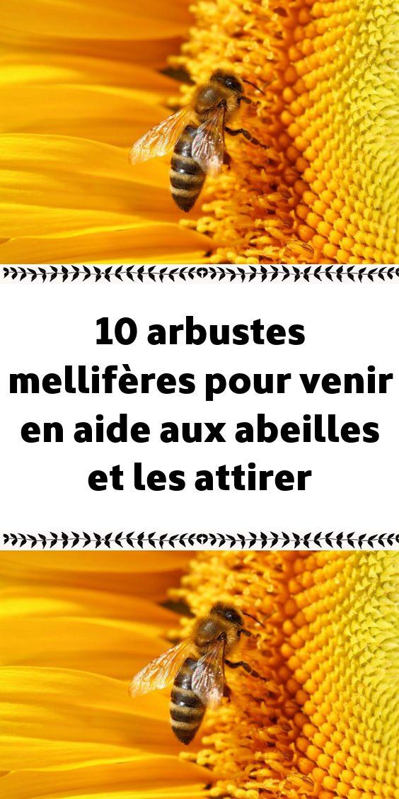10 Arbustes Melliferes Pour Venir En Aide Aux Abeilles Et Les