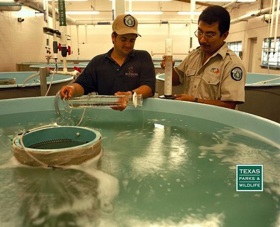 Pinterest the world s catalog of ideas for Fish hatchery texas
