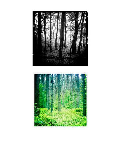 Cathedral Pines II | Alexandra E. Haniford