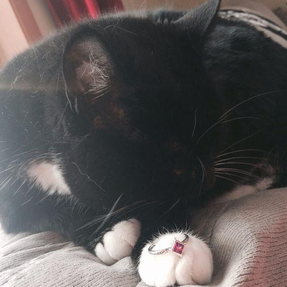 Silpada ring n adorable cat ;3
