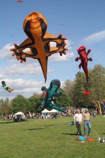 Anche le lucertole possono volare... Almeno alla Vulandra di Ferrara  (Lizards can fly, Ferrara, Italy)