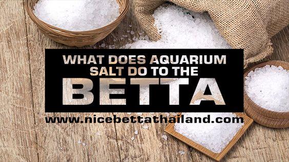 How Good And Bad Is Aquarium Salt For Betta Fish