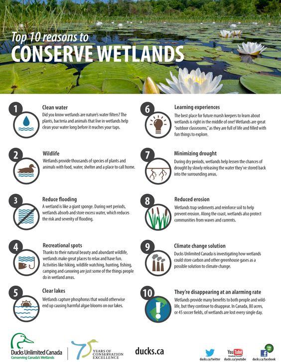 Imagen de http://www.ducks.ca/assets/2013/10/DUC-Fact-Sheet_EN_FINAL.png.