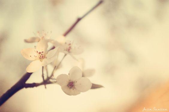 Пролетен цвят/Spring Time Blossoms/Fleurs de printemps