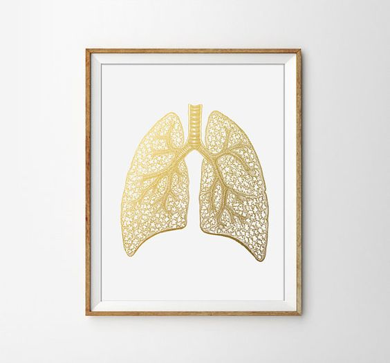 human anatomy print anatomical poster human lung print doctor poster medical wall art anatomy poster faux gold modern office print anatomy office