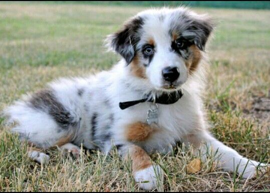 My boyfriend and i r getting this breed once we settle down toghether