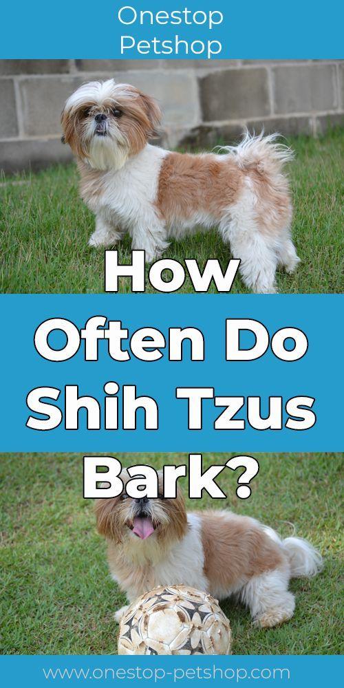 How Often Do Shih Tzus Bark Onestop Petshop Com In 2020 Shih Tzus Large Dog Breeds Poodle Mix Puppies