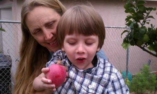 Does anything surpass the pure look of joy on this face? #apples #gardeningwithkids He got to pick his own apple from this year's summer crop of Anna apples.