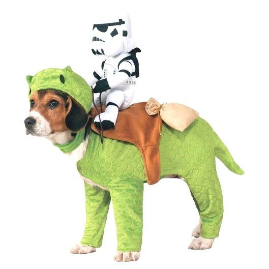 Dog Training Knoxville Tn Big Basin Dog Training Modesto Ca Dog
