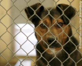 Urge Egypt to Stop Cruel Cull of Dogs!